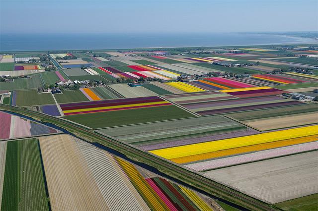Anna-Paulowna-Tulips-6