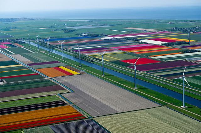 Anna-Paulowna-Tulips-8