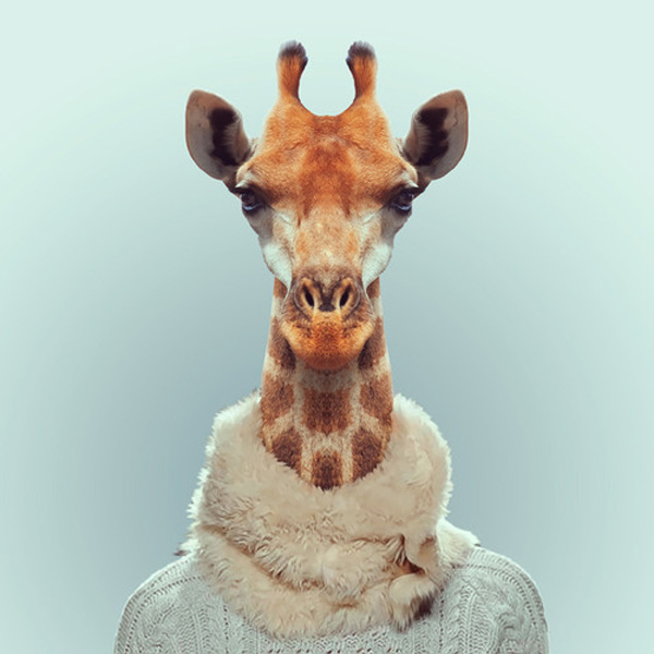 zoo-portraits-by-yago-partal-16
