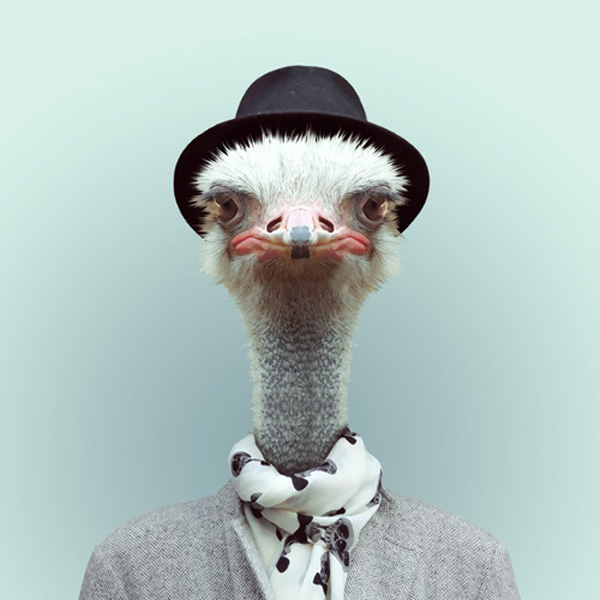 zoo-portraits-by-yago-partal-19