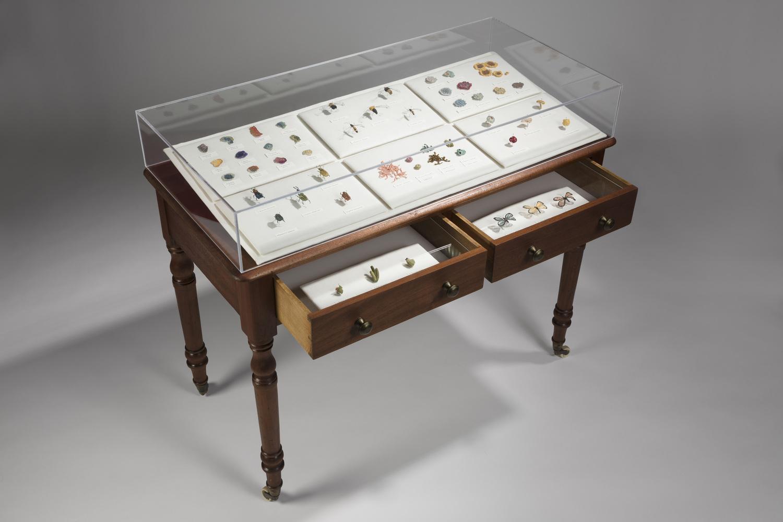 Eleanor Rose   Cabinet Of Curiosities_8